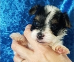 Small #4 Yorkshire Terrier
