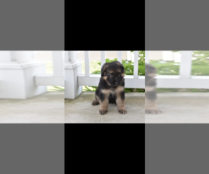 German Shepherd Dog Puppy for sale in CONCORD TWP, OH, USA