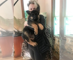 German Shepherd Dog Puppy for Sale in TOWNSEND, Massachusetts USA
