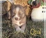 Image preview for Ad Listing. Nickname: Opal