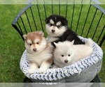 Image preview for Ad Listing. Nickname: Litter of 4