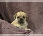 Puppy 5 Puggle