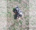 Small #4 Texas Heeler