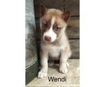 Small Photo #6 Siberian Husky Puppy For Sale in DEARBORN, MO, USA