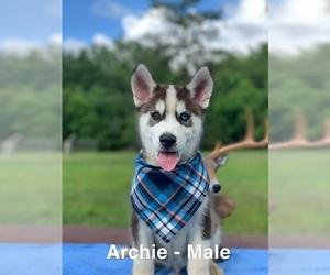 Siberian Husky Puppy for Sale in OAKDALE, Louisiana USA