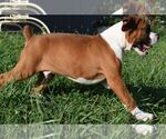 Small #6 Boxer