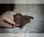 Image preview for Ad Listing. Nickname: Hershey