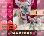 Image preview for Ad Listing. Nickname: MAXIMUS