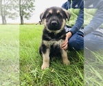 Small #53 German Shepherd Dog