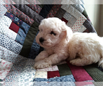 Image preview for Ad Listing. Nickname: Puppy #2