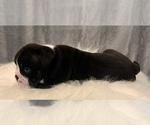 Small #6 Bulldog