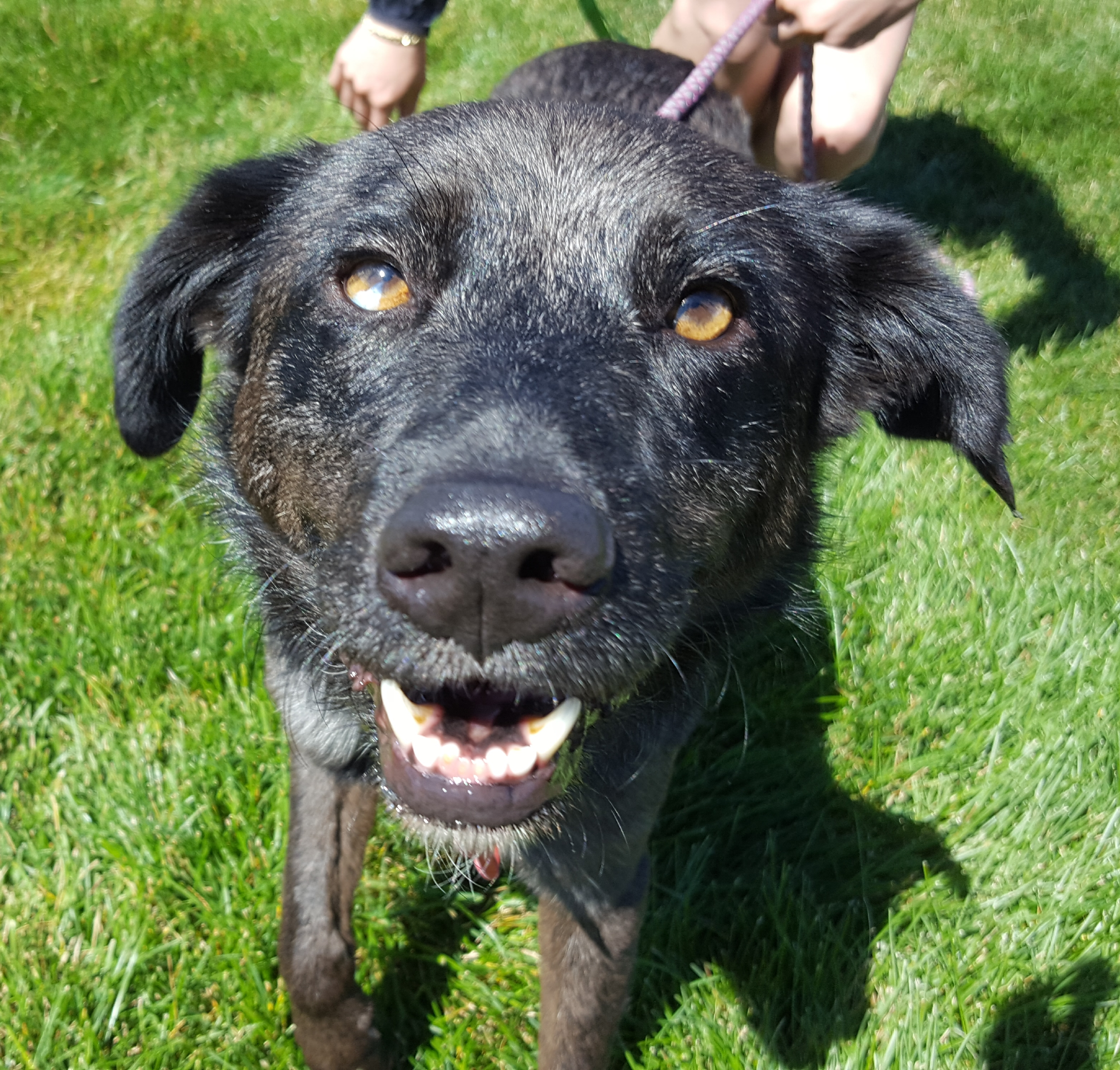 Adopt A Senior Dog Minnesota