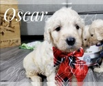 Image preview for Ad Listing. Nickname: Oscar
