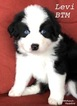 Australian Shepherd Puppy For Sale in WEATHERFORD, TX, USA