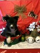 Pomsky Puppy For Sale in MIDDLETOWN, OH, USA