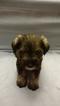 Puppy 7 Schnauzer (Miniature)