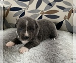 Image preview for Ad Listing. Nickname: Puppy #3