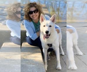 German Shepherd Dog-Siberian Husky Mix Puppy for sale in BUFORD, GA, USA