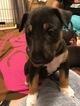 Small #5 Bull Terrier