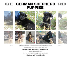 German Shepherd Dog Puppy for sale in MIDLAND, MI, USA