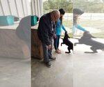 Small #112 Rottweiler