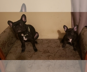 French Bulldog Puppy for sale in CONLEY, GA, USA