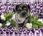 Image preview for Ad Listing. Nickname: Lelona