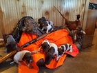 German Shorthaired Pointer Puppy For Sale in SPICKARD, MO