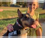 Small #952 Bull Terrier Mix