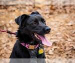 Small #719 Border Collie Mix