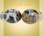 Small #9 Lagotto Romagnolo