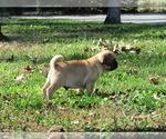 Small #1 Puggle