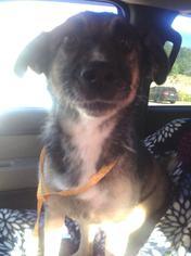 Raleigh (FAMILY DOG) - German Shepherd Dog / Norwegian Elkhound / Mixed (medium coat) Dog For Adoption