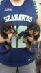Rottweiler Puppy For Sale in AUBURN, Washington,