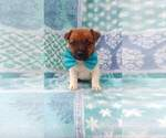 Small #3 Jack Russell Terrier