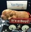 Australian Labradoodle Puppy For Sale in OCONOMOWOC, WI,