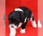 Image preview for Ad Listing. Nickname: OREO
