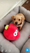 Mutt Puppy For Sale in HOUSTON, TX