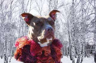 Queen - Pit Bull Terrier / Mixed (short coat) Dog For Adoption