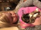 Shih Tzu Puppy For Sale in PLYMOUTH, MI, USA