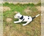 Small #4 Bernese Mountain Dog Mix