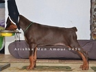 Doberman Pinscher Puppy For Sale near 92562, Murrieta, CA, USA