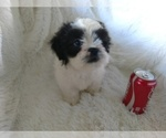 Image preview for Ad Listing. Nickname: TUFFY