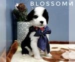 Image preview for Ad Listing. Nickname: Blossom