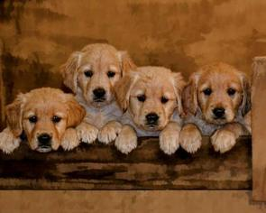 Golden Retriever Puppy For Sale in SEVILLE, OH