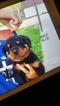 Rottweiler Puppy For Sale in MONTGOMERY, Indiana,