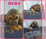 Image preview for Ad Listing. Nickname: REBA