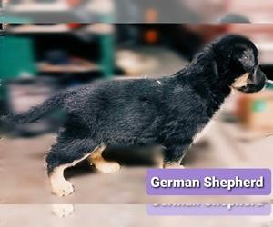 German Shepherd Dog Puppy for sale in ZILLAH, WA, USA