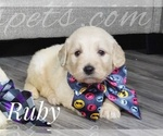 Image preview for Ad Listing. Nickname: Ruby