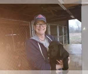 Labrador Retriever Puppy for Sale in BARDSTOWN, Kentucky USA
